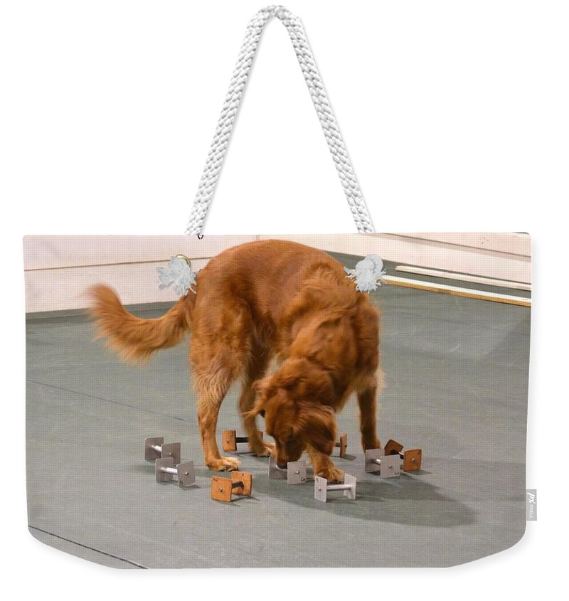 Golden Retriever Weekender Tote Bag featuring the photograph Finding The Right Scent by Maria Urso