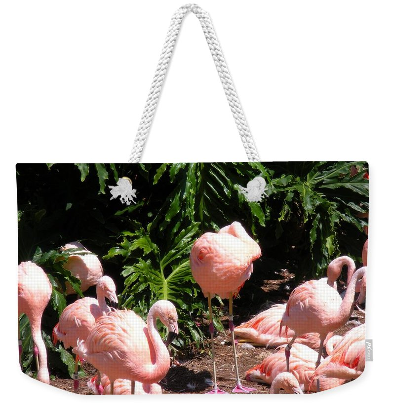 Birds Weekender Tote Bag featuring the photograph Flamigo Gathering by Maria Bonnier-Perez
