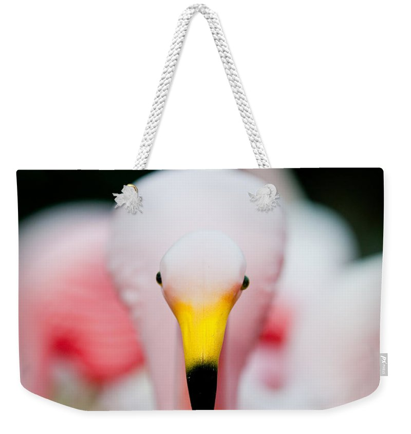 Austin Weekender Tote Bag featuring the photograph Flamingo 2 by Sean Wray