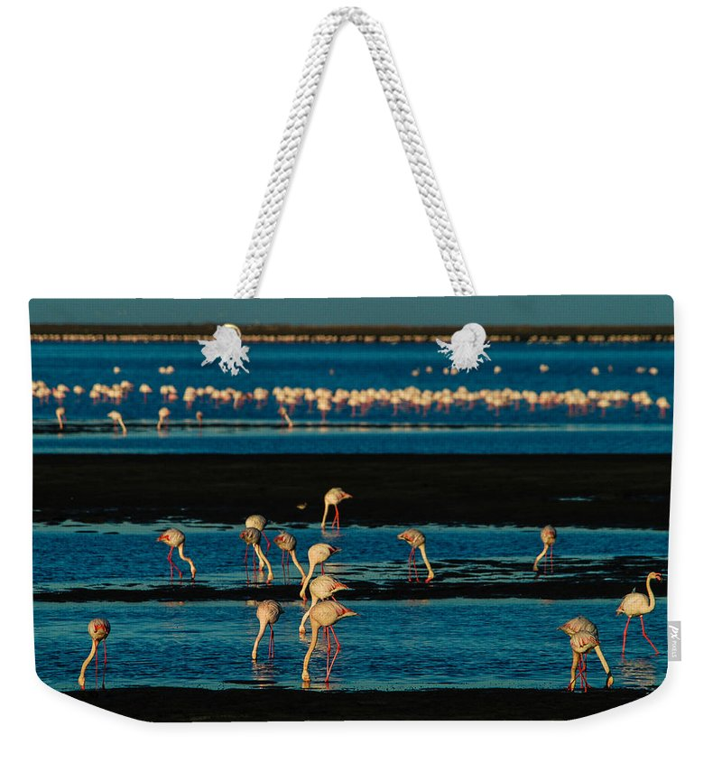 Africa Weekender Tote Bag featuring the photograph Flamingo Gathering by Alistair Lyne