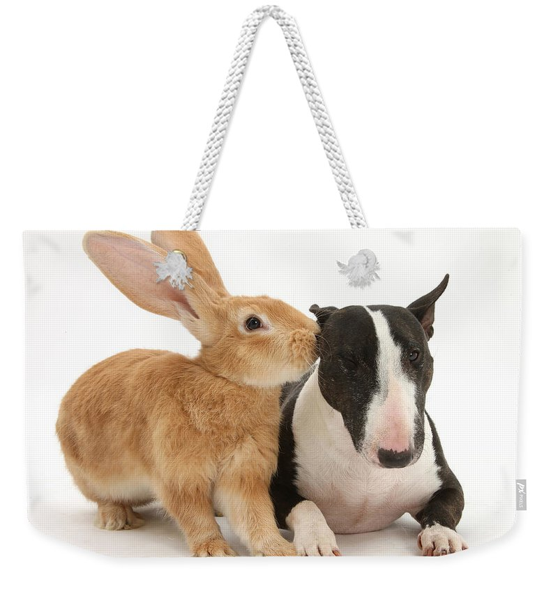 Nature Weekender Tote Bag featuring the photograph Flemish Giant Rabbit And Miniature Bull by Mark Taylor