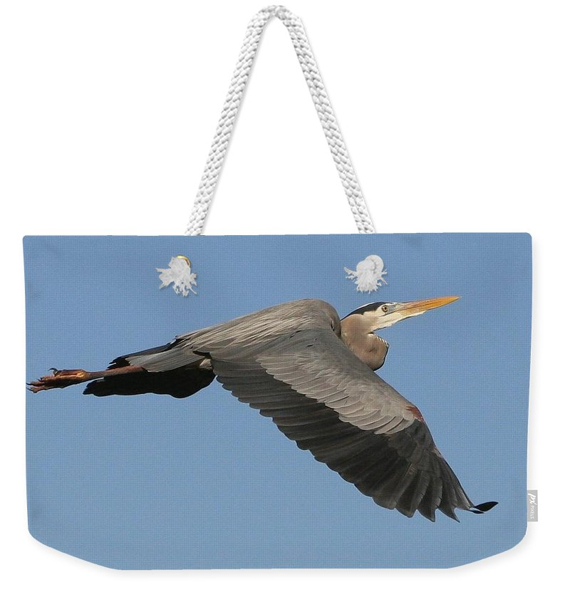 Birds Weekender Tote Bag featuring the photograph Flight Of The Great Blue Heron by Myrna Bradshaw