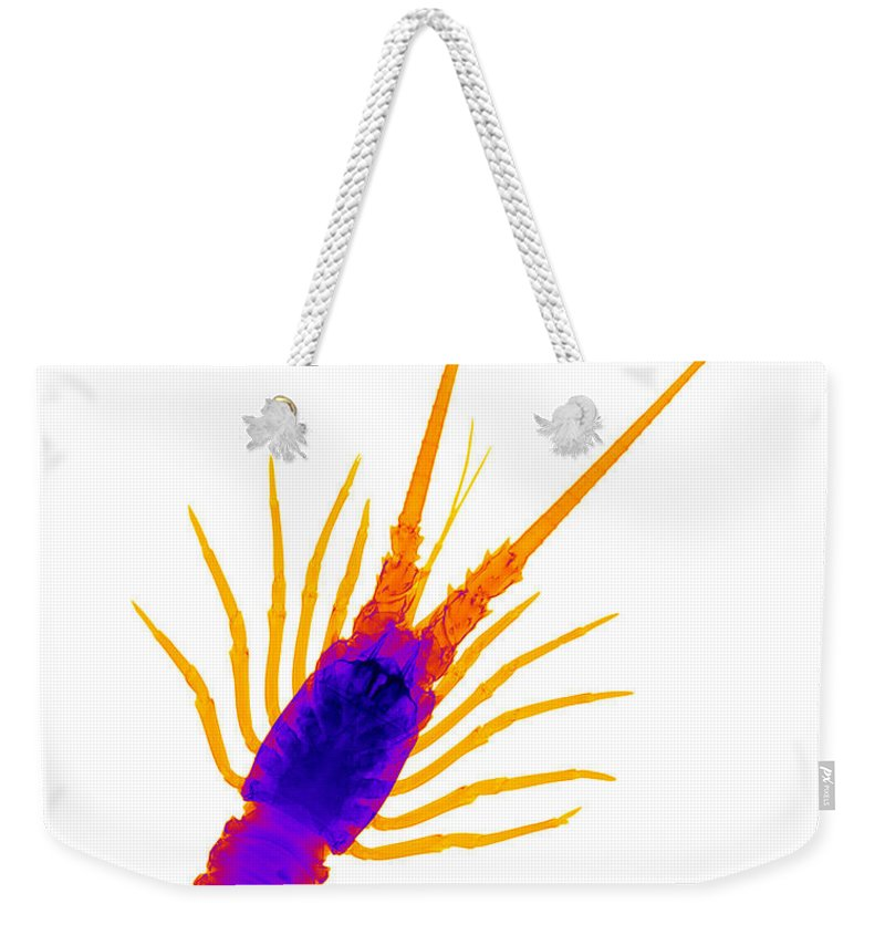 Radiograph Weekender Tote Bag featuring the photograph Florida Spiny Lobster X-ray by Ted Kinsman