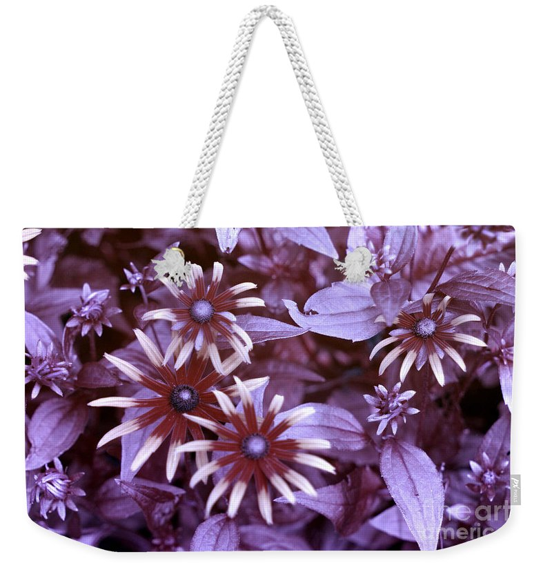Black Eyed Susan Weekender Tote Bag featuring the photograph Flower Rudbeckia Fulgida In Uv Light by Ted Kinsman