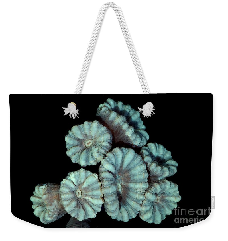 Animal Weekender Tote Bag featuring the photograph Fluorescent Coral In In White Light by Ted Kinsman