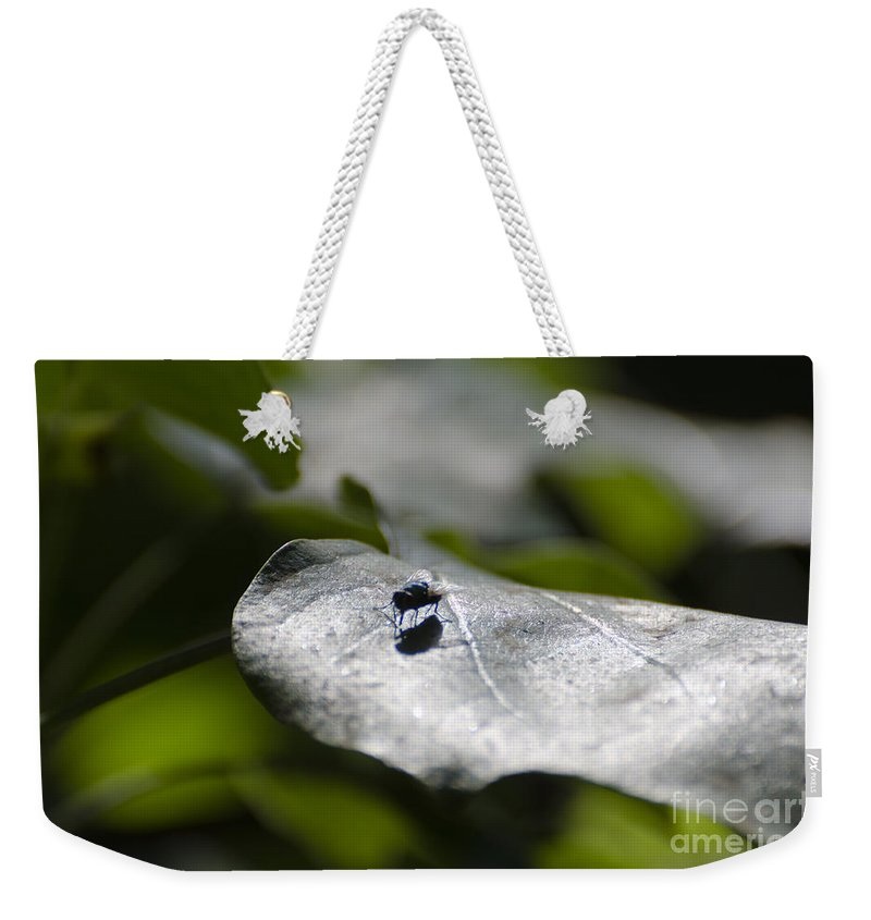 Fly Weekender Tote Bag featuring the photograph Fly On A Green Leaf by Mats Silvan