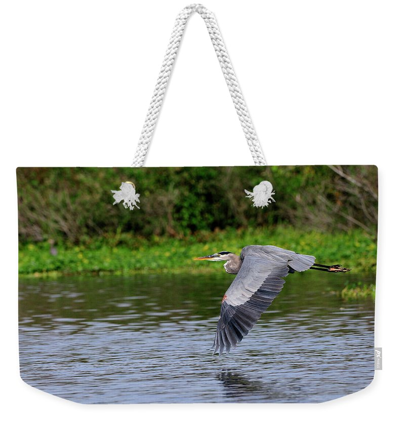 Great Blue Heron Weekender Tote Bag featuring the photograph Flying Across The St Johns by Bill Dodsworth