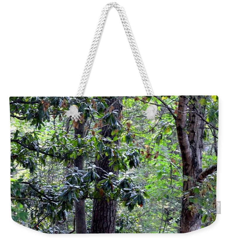 Forest Weekender Tote Bag featuring the photograph Forest Trees by Maria Urso