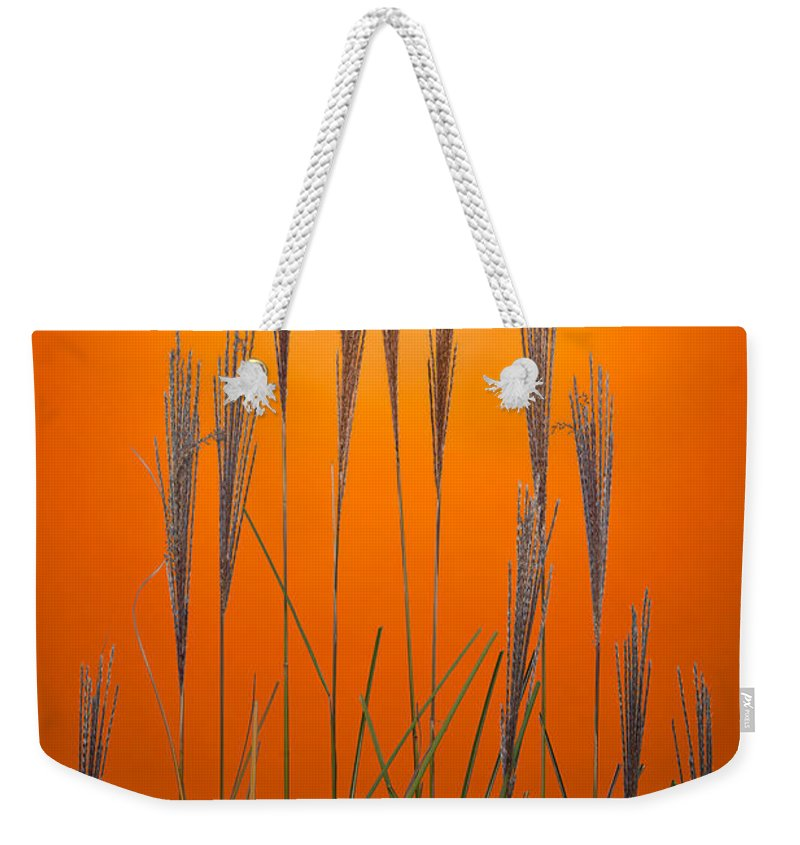 Grass Weekender Tote Bag featuring the photograph Fountain Grass In Orange by Steve Gadomski