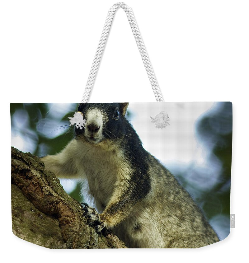 Beaufort County Weekender Tote Bag featuring the photograph Fox Squirrel by Phill Doherty