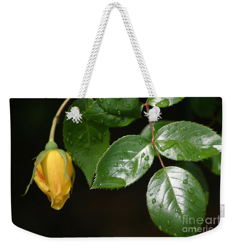 Rose Weekender Tote Bag featuring the photograph Friendship Rose by Living Color Photography Lorraine Lynch