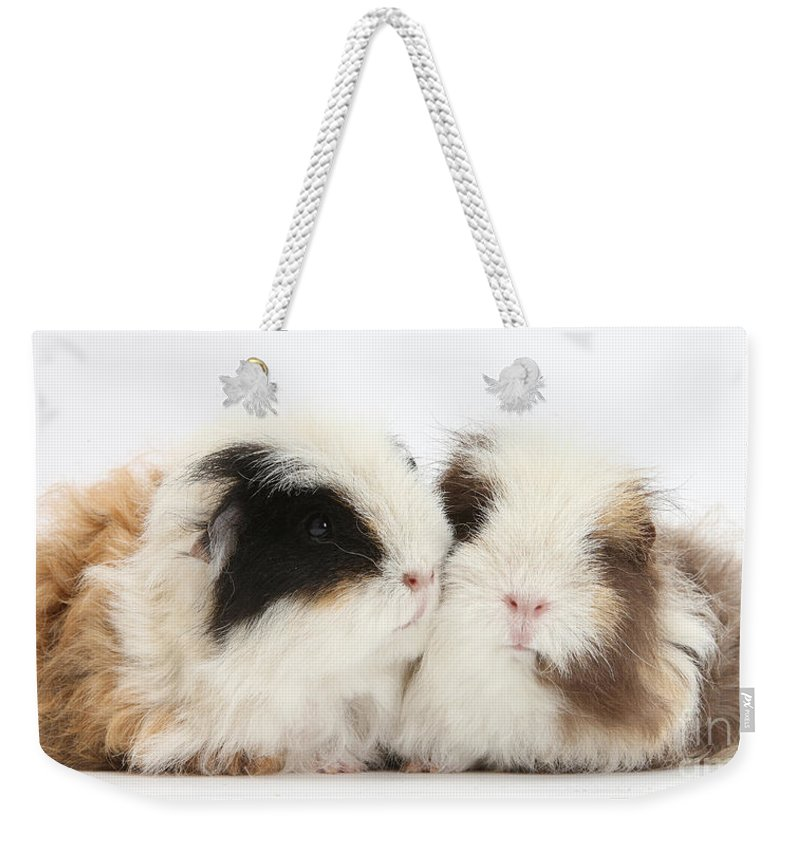 Nature Weekender Tote Bag featuring the photograph Frizzy Alpaca Guinea Pigs by Mark Taylor