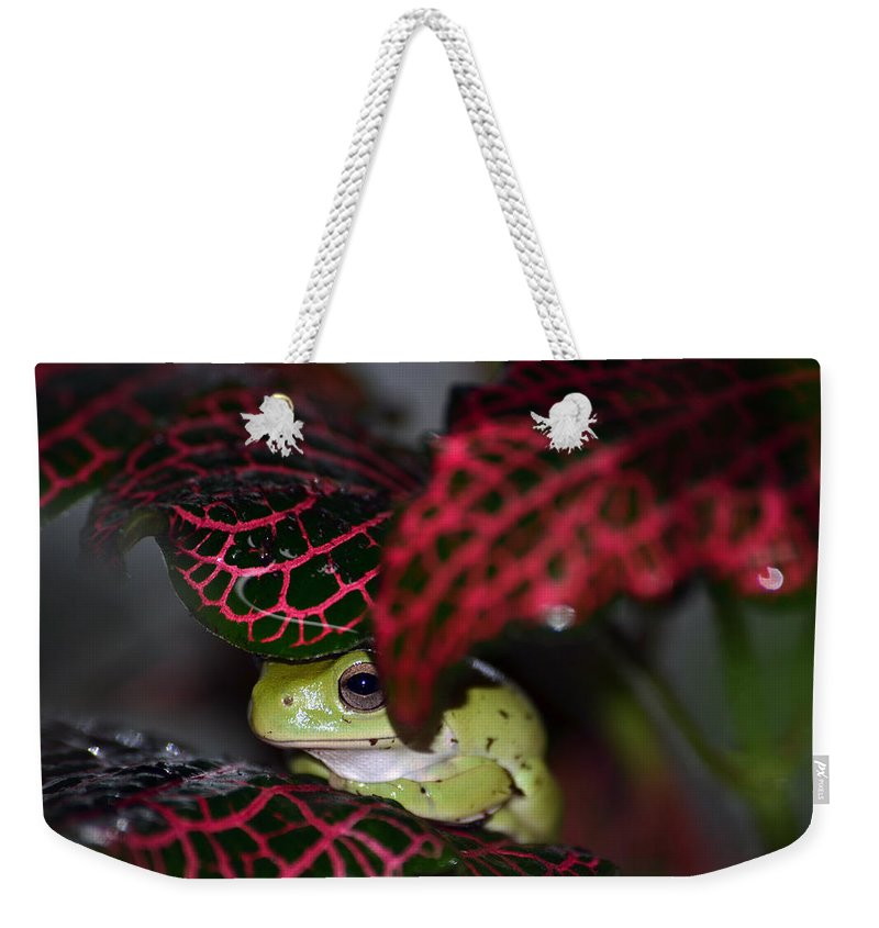 Frog Weekender Tote Bag featuring the photograph Frog On A Leaf by Lori Tambakis
