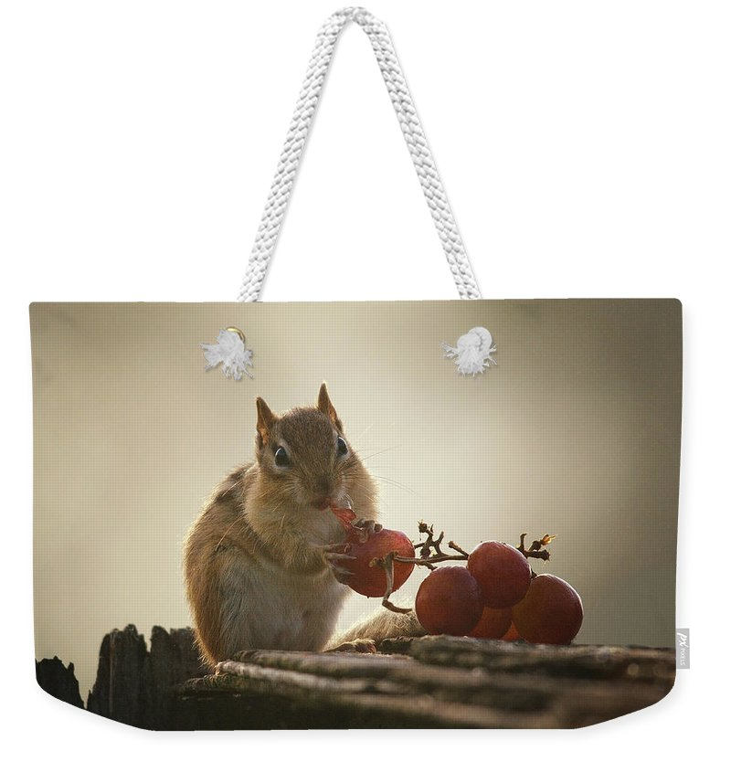 Chipmunk Weekender Tote Bag featuring the photograph Fruit Of The Vine by Susan Capuano
