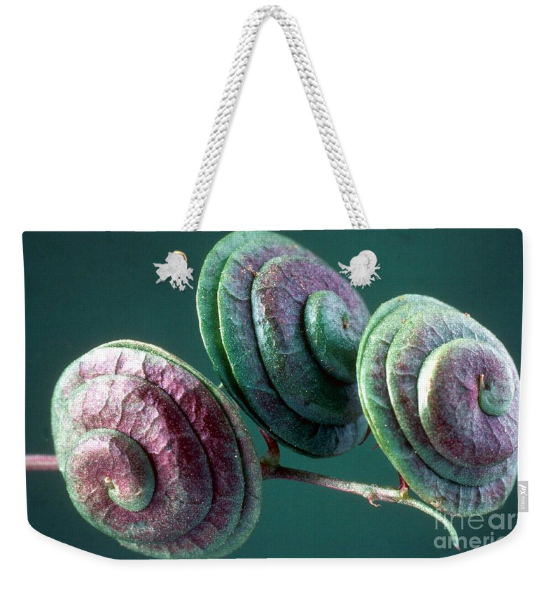 Medicago Orbicularis Weekender Tote Bag featuring the photograph Fruits Of Wild Lucerne by Nuridsany et Perennou and Photo Researchers