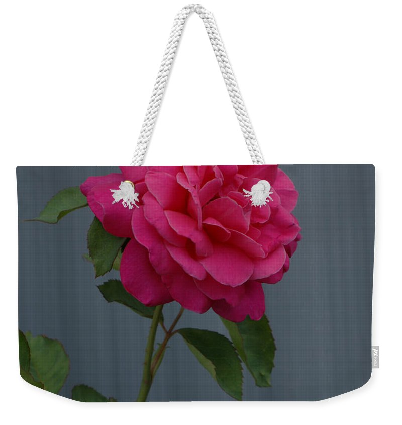 Pink Rose Weekender Tote Bag featuring the photograph Full Bloom by Ernie Echols