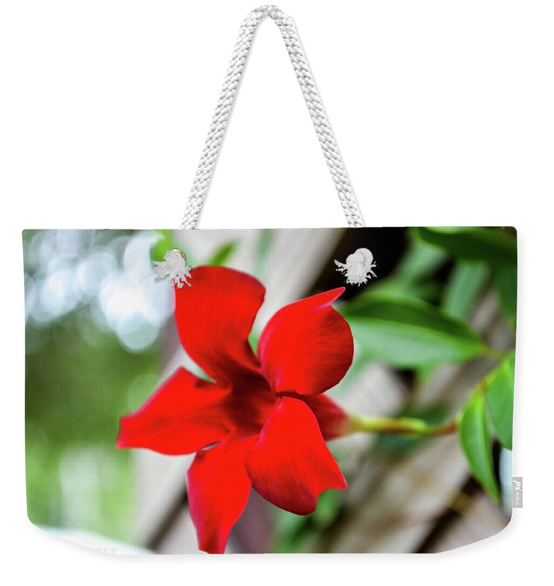 Flowers Weekender Tote Bag featuring the photograph Full Bloom by Shannon Harrington