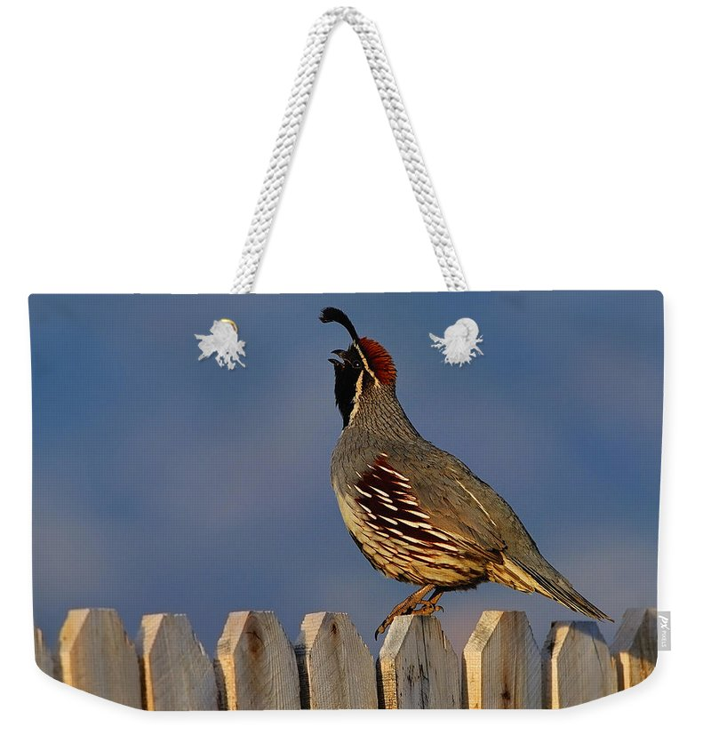 Gambel's Quail Weekender Tote Bag featuring the photograph Gambel's Quail by Tony Beck