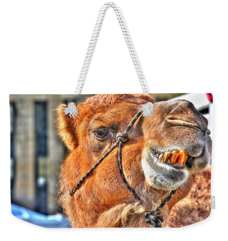 Weekender Tote Bag featuring the photograph Gangsta Grillin This Camels Chillin by Michael Frank Jr