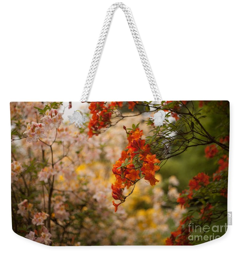 Rhodies Weekender Tote Bag featuring the photograph Gathering Of Radiance by Mike Reid