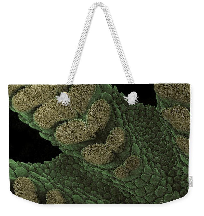 Animal Weekender Tote Bag featuring the photograph Gecko Foot Pads by Ted Kinsman