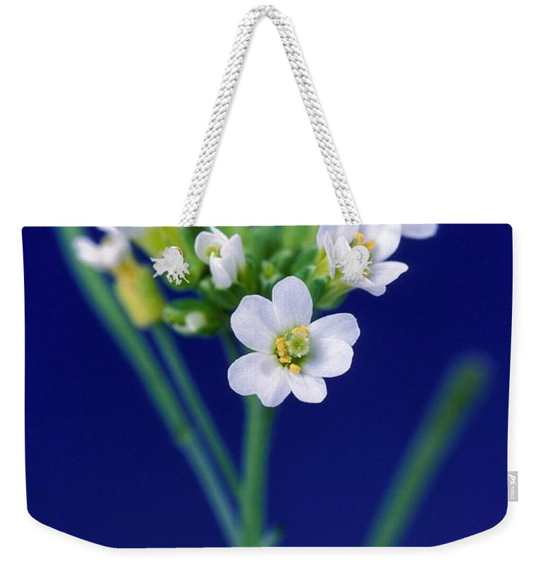 Plant Weekender Tote Bag featuring the photograph Genetically Modified Plant by Science Source
