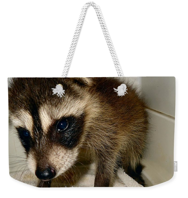 Raccoon Weekender Tote Bag featuring the photograph Gentleness by Art Dingo