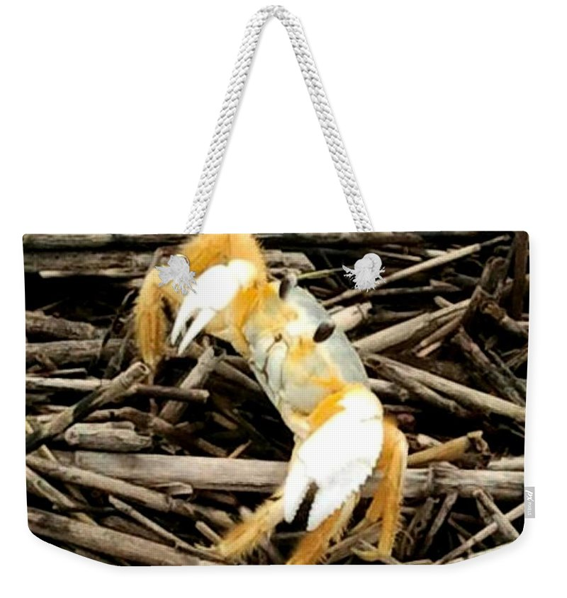 Fish Weekender Tote Bag featuring the photograph Ghost Crab by Edmund Akers