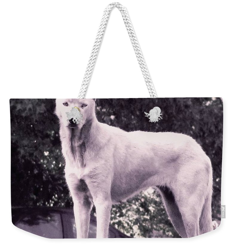 Wolf Weekender Tote Bag featuring the photograph Ghost The Wolf by Maria Urso