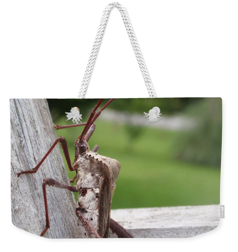 Assassin Weekender Tote Bag featuring the photograph Giant Assassin Bug by Kathy Clark