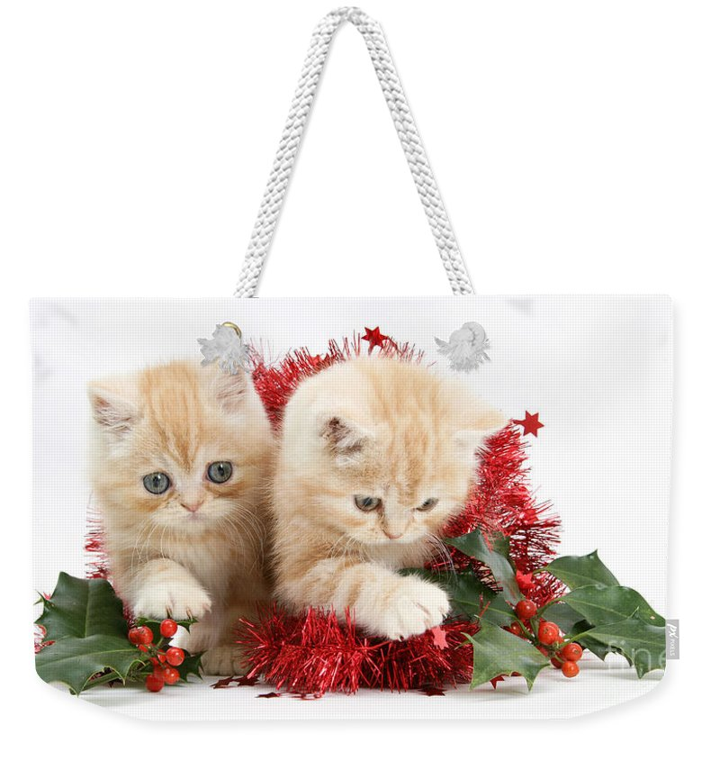 Animal Weekender Tote Bag featuring the photograph Ginger Kittens by Mark Taylor