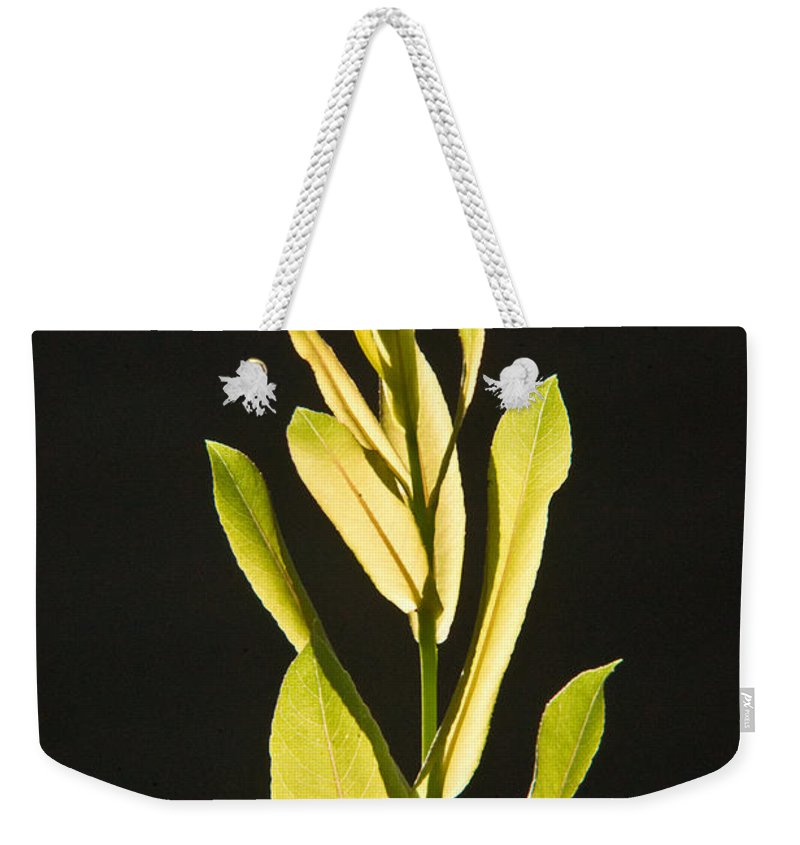 Glorious Weekender Tote Bag featuring the photograph Glorious Willow Aglow by Douglas Barnett