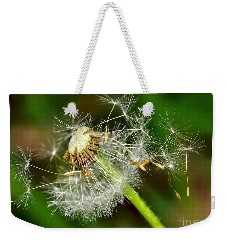 Photography Weekender Tote Bag featuring the photograph Glowing Dandelion Spores by Kaye Menner