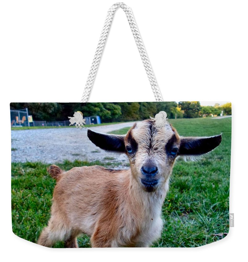 Baby Weekender Tote Bag featuring the photograph Goatee by Art Dingo