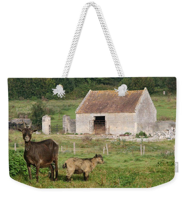 Goats Weekender Tote Bag featuring the photograph Goats by Diana Haronis