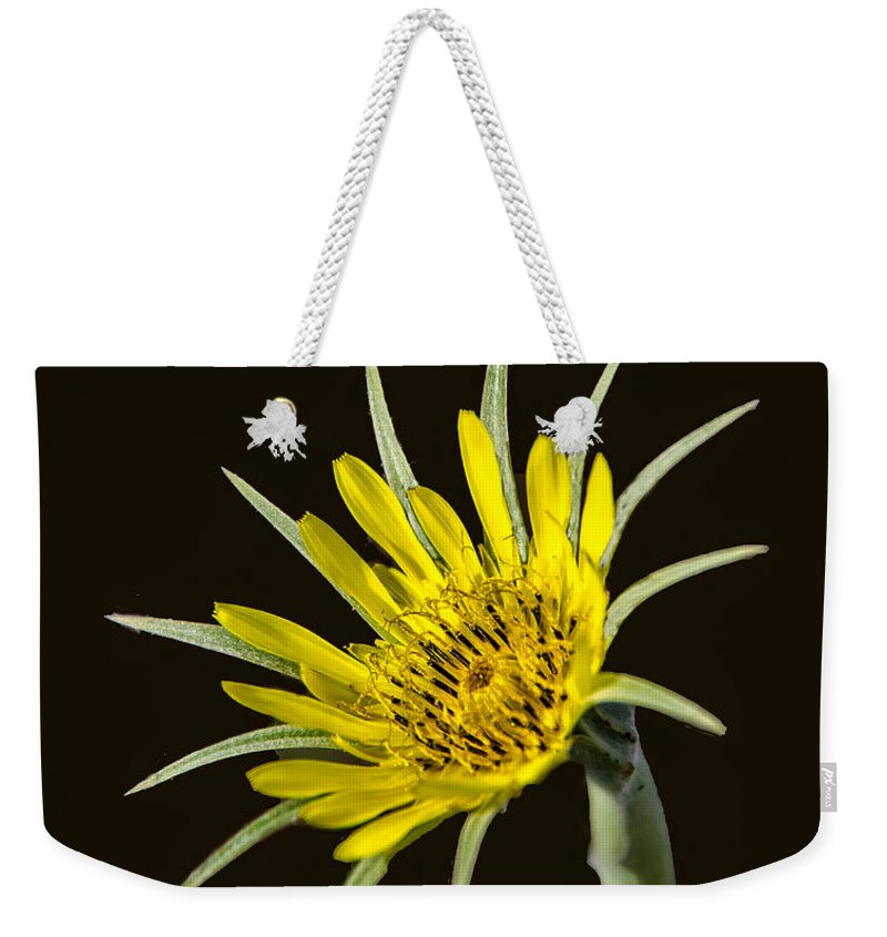 Yellow Salsify Weekender Tote Bag featuring the photograph Goatsbeard by Robert Bales
