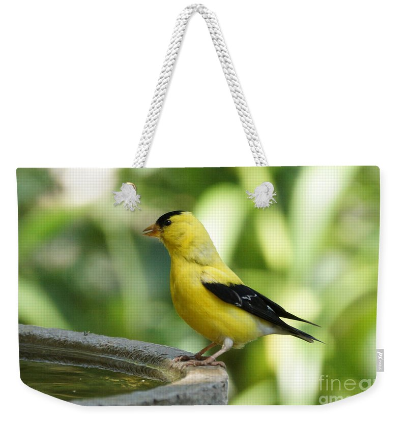 Finch Weekender Tote Bag featuring the photograph Gold Finch At The Bird Bath by Lori Tordsen