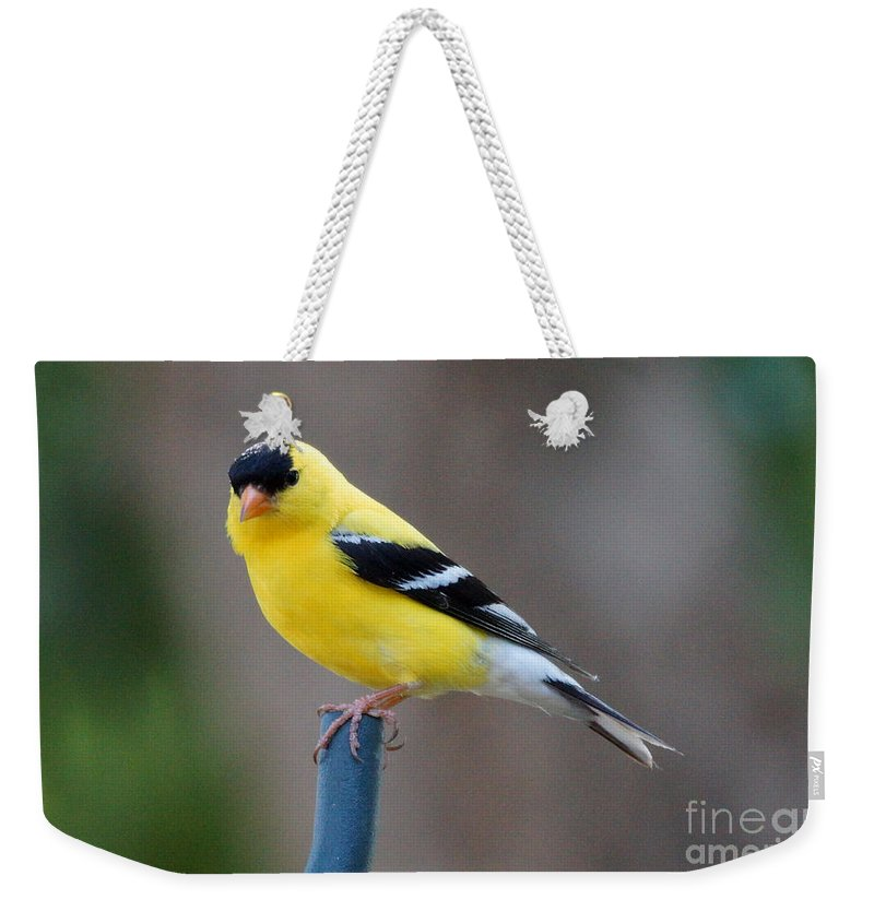 Finch Weekender Tote Bag featuring the photograph Gold Finch by Lori Tordsen