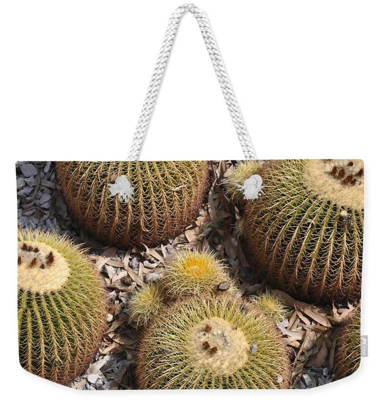 California Weekender Tote Bag featuring the photograph Golden Barrel Cactus 3 by Rich Bodane
