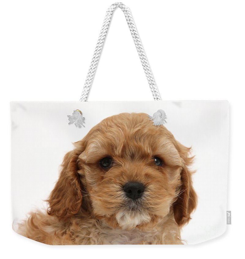 Animal Weekender Tote Bag featuring the photograph Golden Cockerpoo Puppy by Mark Taylor