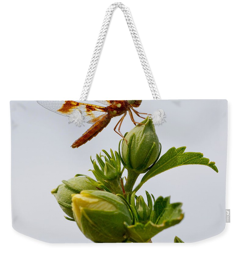 Nature Weekender Tote Bag featuring the photograph Golden Dragon by Kenneth F Konjevich