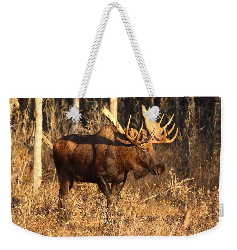 Doug Lloyd Weekender Tote Bag featuring the photograph Golden Light by Doug Lloyd