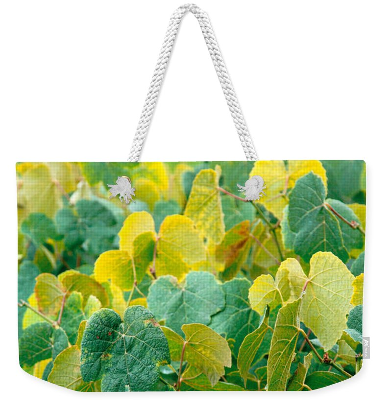 Grape Vines Weekender Tote Bag featuring the photograph Grapevines In Azores Islands by Gaspar Avila