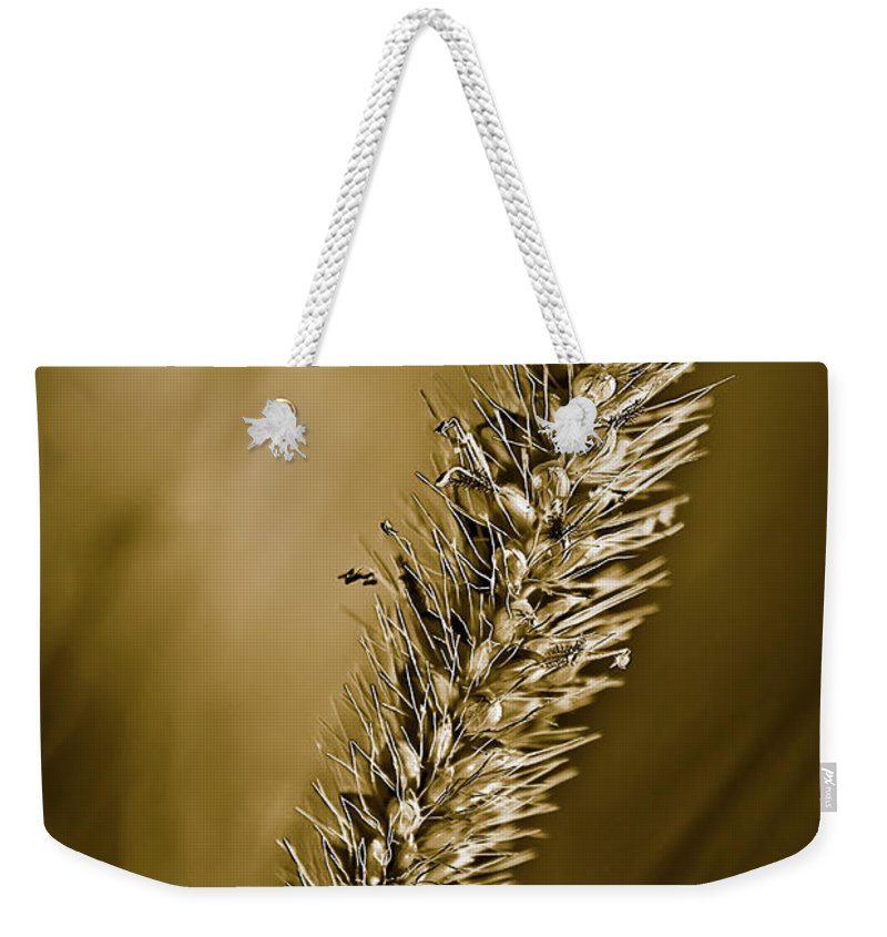 Grass Seed Weekender Tote Bag featuring the photograph Grass Seedhead by Onyonet Photo Studios