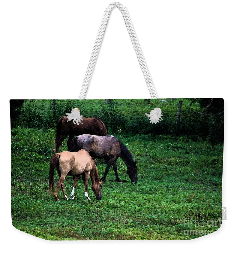 Scott Weekender Tote Bag featuring the photograph Grazing - Watercolor by Scott Hervieux