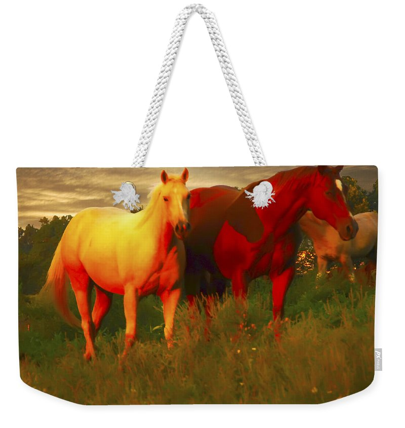 Horse Lovers Weekender Tote Bag featuring the photograph Grazing In The Late Evening Light by Randall Branham