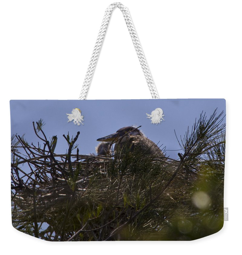 Great Blue Heron Weekender Tote Bag featuring the photograph Great Blue Heron In Nest by Roger Wedegis
