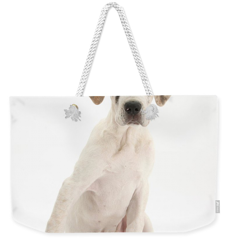 Nature Weekender Tote Bag featuring the photograph Great Dane Pup by Mark Taylor