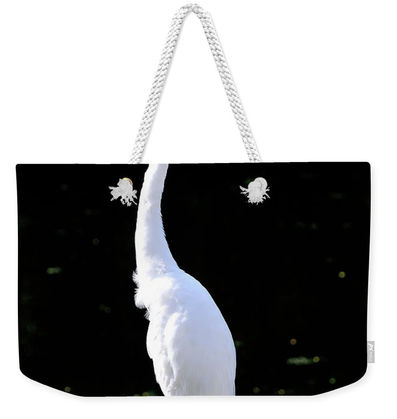 Great Weekender Tote Bag featuring the photograph Great White Egret Singing In The Morning Light by Bill Dodsworth