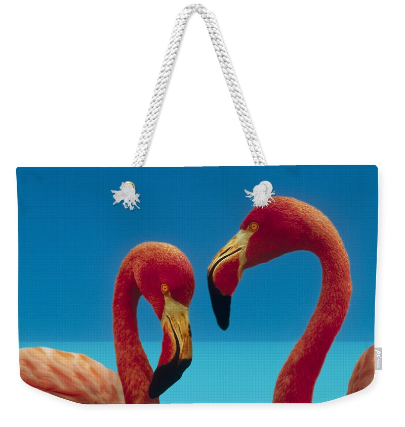 00172310 Weekender Tote Bag featuring the photograph Greater Flamingo Courting Pair by Tim Fitzharris